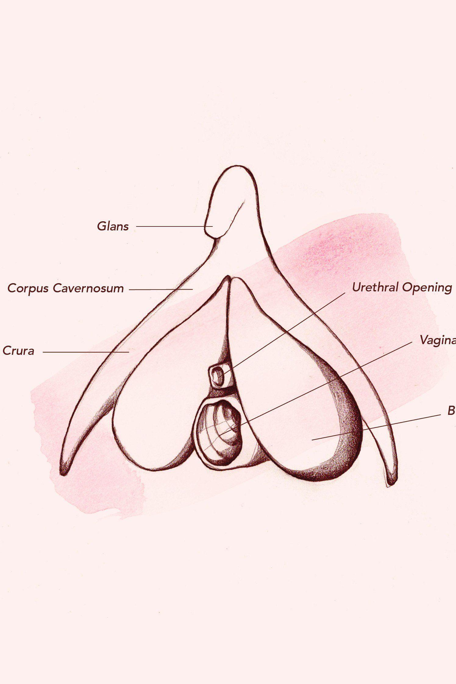 Topic, pleasant Cartoons of pussy anatomy speak this