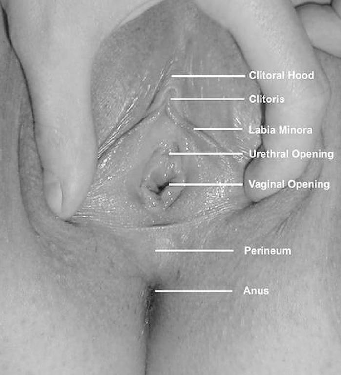 Radar reccomend Large vulva photographs