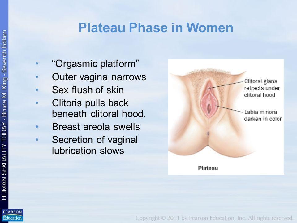 Wasp reccomend Engorgment of clitoris