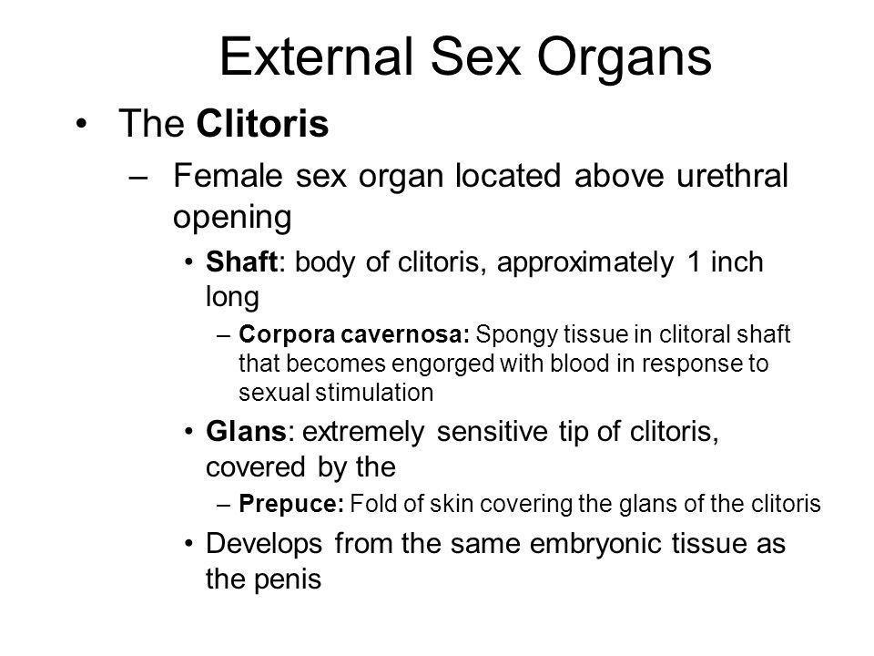 best of Clitoris Engorgment of