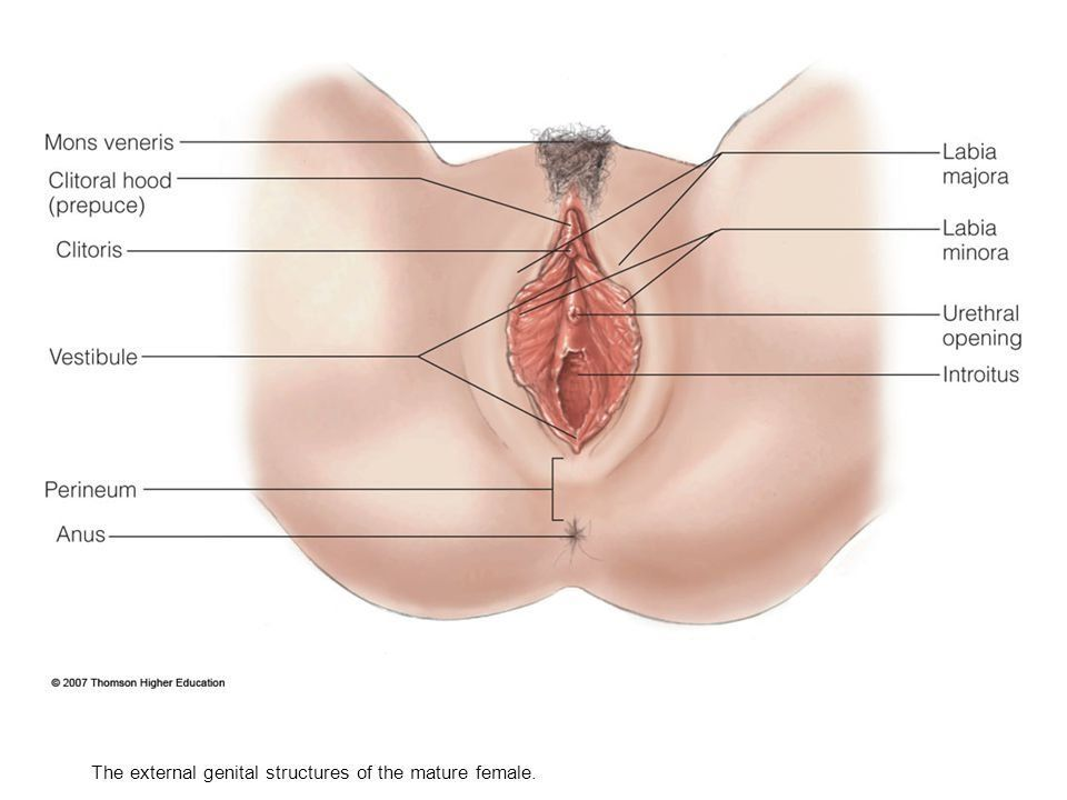 Vaginal expansion exercises