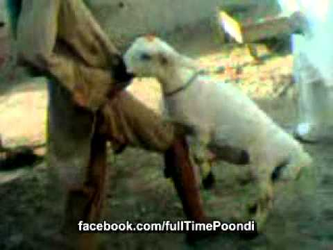 Excellent idea. goat and girls sex downlod videos