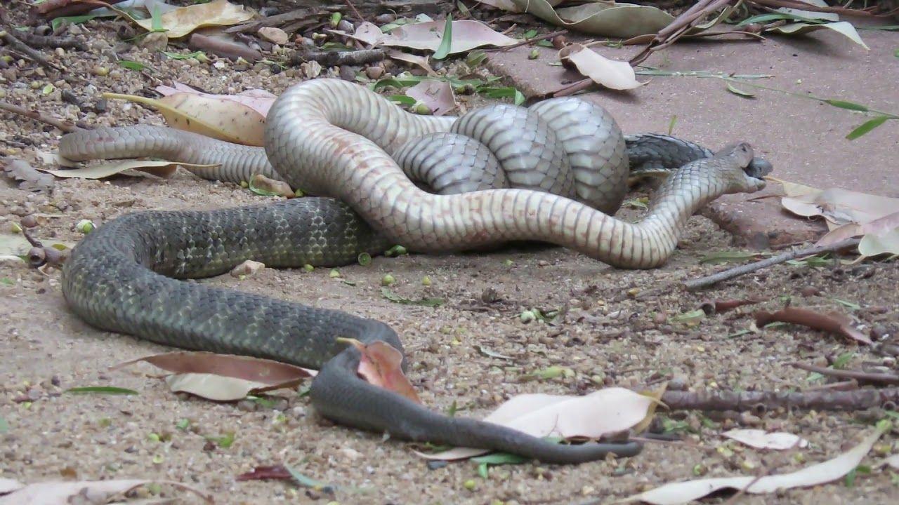 best of Download videos Snakes wet girl